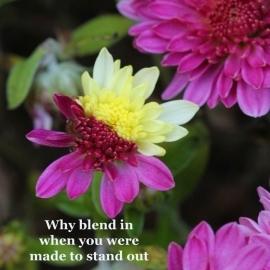 Scripture & Inspirational 12 image